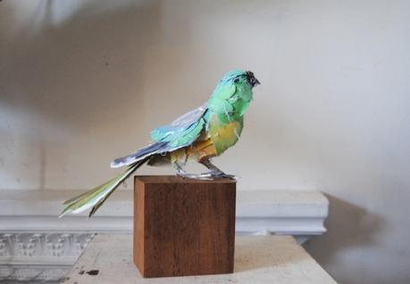Grass-Parrot